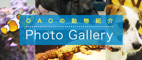 OAOの動物紹介 Photo Gallery