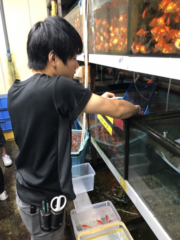 アクアライフコース 研修旅行 神畑養魚_180727_0019