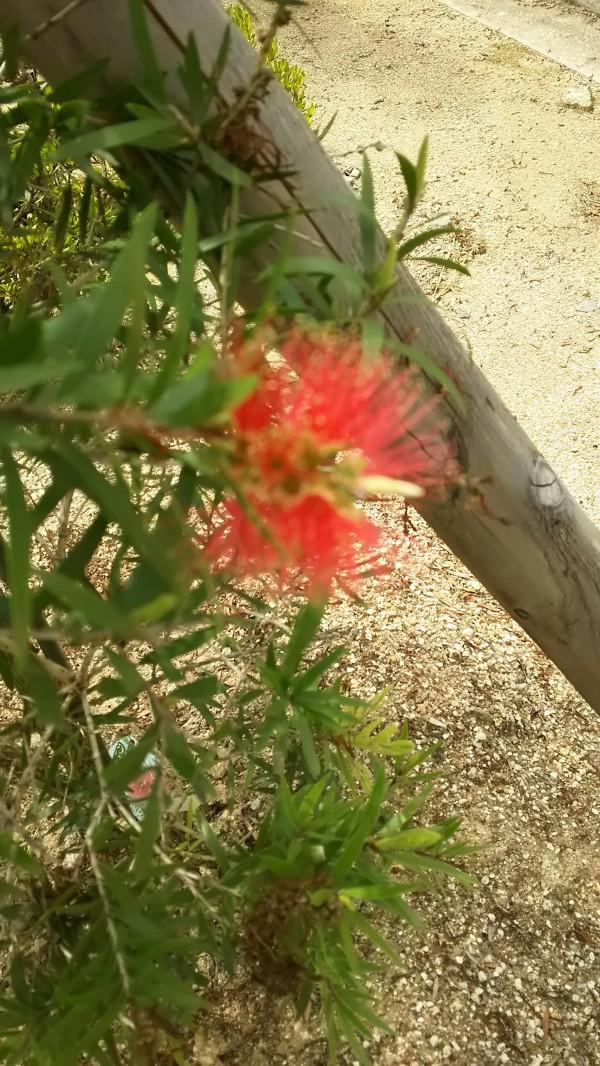 ながた尚老苑で植栽管理実習 627_180629_0003