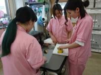 6月30日体験入学 トリマー看護合同_180702_0005