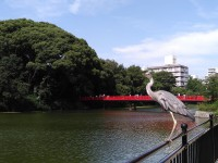 天王寺動物園 カメ調査_180625_0001