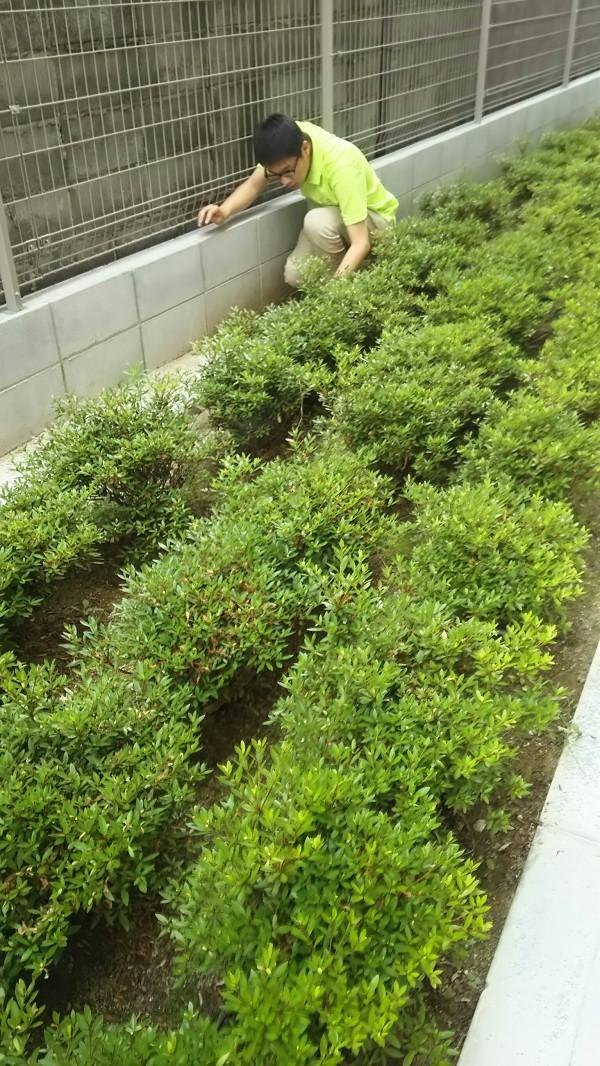 ながた尚老苑で植栽管理実習 627_180629_0005