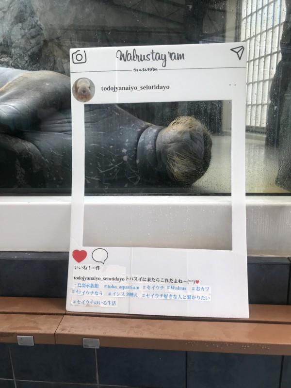 2018615水生2年鳥羽水族館_180625_0009