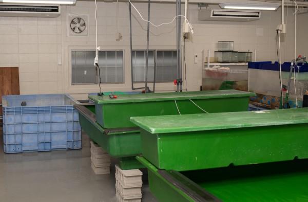 新しく増設された緑の水槽