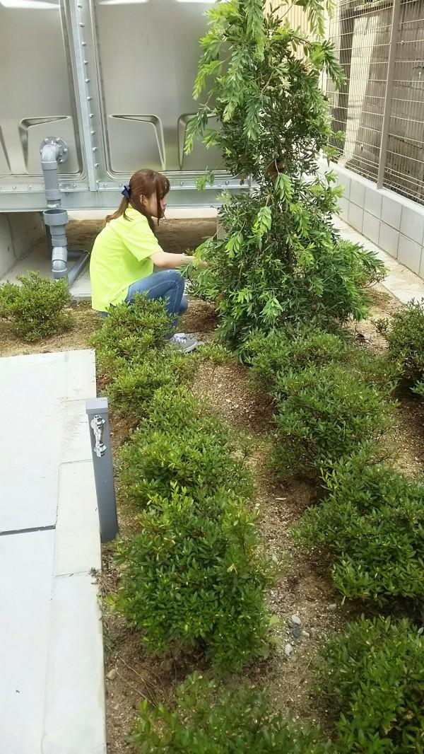 ながた尚老苑で植栽管理実習 627_180629_0006